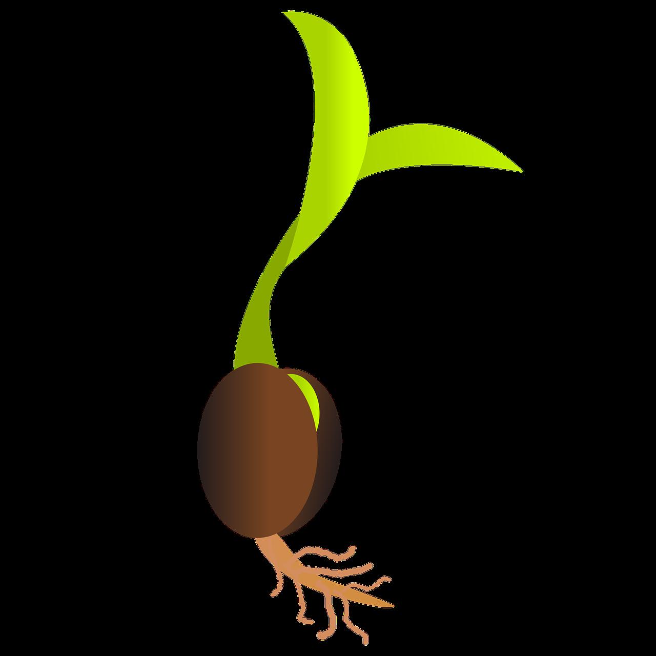 My germination